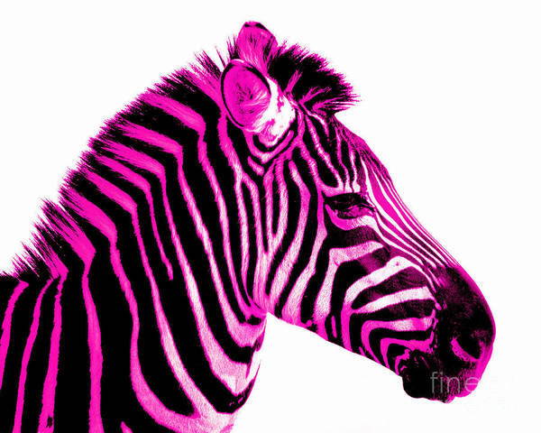 Pink Photograph - Hot Pink Zebra by Rebecca Margraf