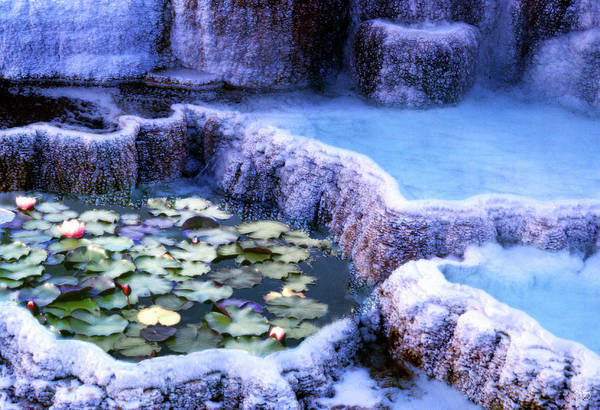 Photograph - Hot Springs And Lilies by Wayne King