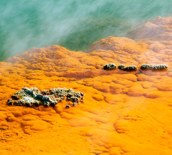 Photograph - Hot Springs by Nicholas Blackwell