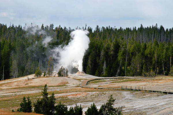 Photograph - Hot Steam Dog Yellowstone National Park Wy by Christine Till