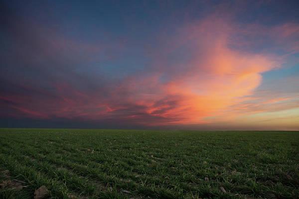 Wall Art - Photograph - Hot Winter Wheat by Thomas Zimmerman