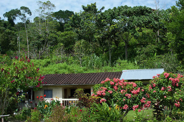 Photograph - House Beside The Napo River by Cascade Colors