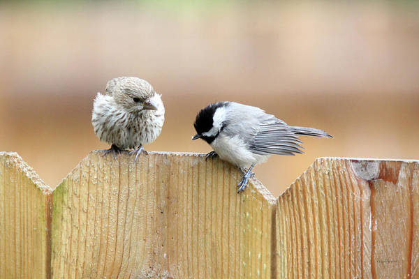 Photograph - House Finch And Chickadee Youngsters by Ericamaxine Price