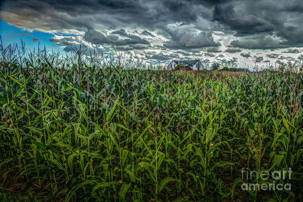 Photograph - House In The Cornfield by Roger Monahan