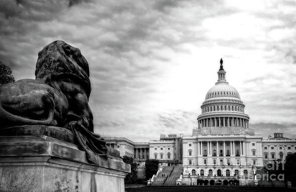 Photograph - House Of Lions by Scott Kemper