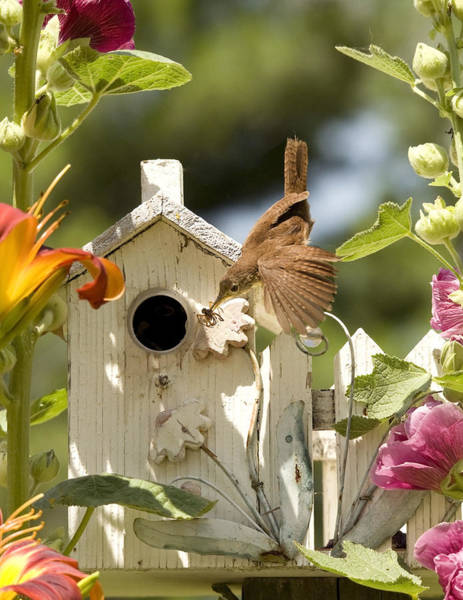 Spider Lily Wall Art - Photograph - House Wren by Donna Caplinger