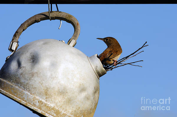 Photograph - House Wren In New Home by Thomas R Fletcher