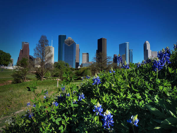 Photograph - Houston Bluebonnets 001 by Lance Vaughn