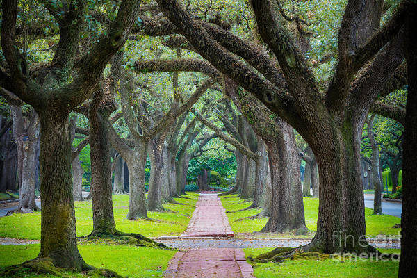 Wall Art - Photograph - Houston Trees by Inge Johnsson