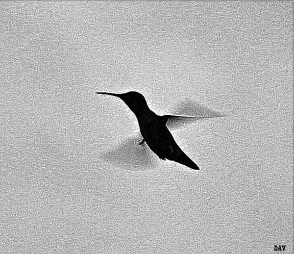 Wall Art - Photograph - Hover Of The Hummingbird by Debra     Vatalaro