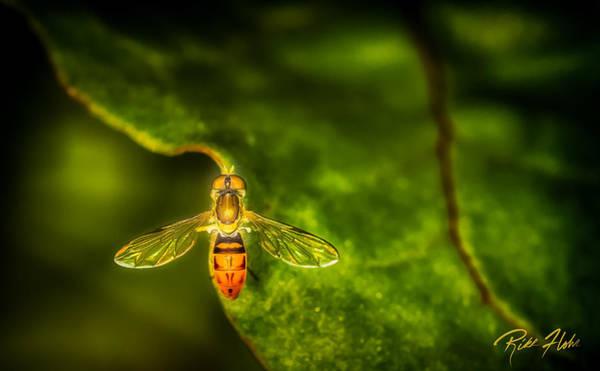 Photograph - Hoverfly In Morning Light by Rikk Flohr