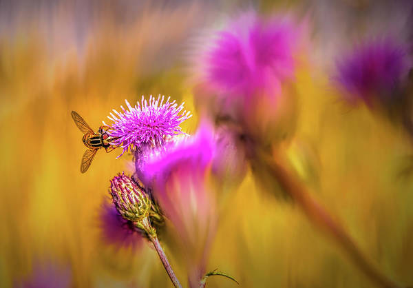 Digital Art - Hoverfly Thistle #g7 by Leif Sohlman