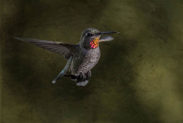 Photograph - Hovering Hummer by Randy Hall