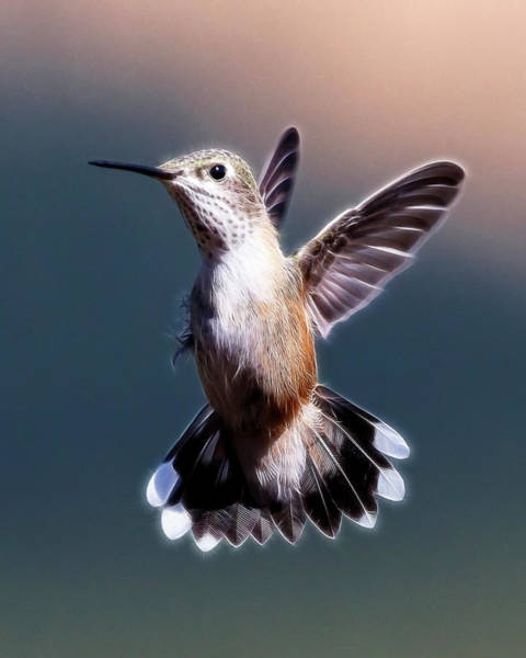 Digital Art - Hovering Hummer by Wes and Dotty Weber