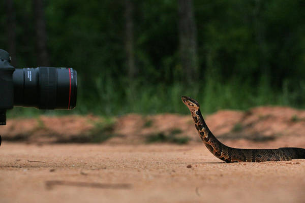Photograph - How I Shoot Snakes by JC Findley