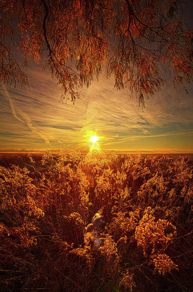 Photograph - How, In Such Forgetting, Do We Become by Phil Koch