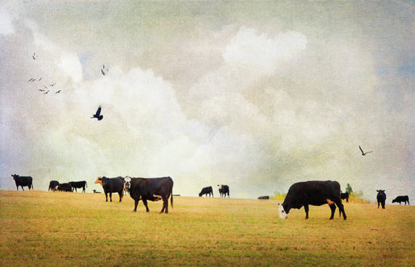 Photograph - How Now Black Cow by Theresa Tahara