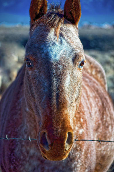 Photograph - Howdy Neighbor  by Charles Muhle