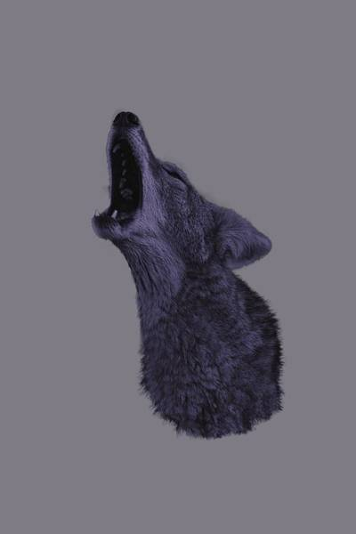 Photograph - Howling Coyote by Brian Cross