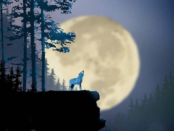 Coyote Painting - Howling Coyote by Paul Sachtleben