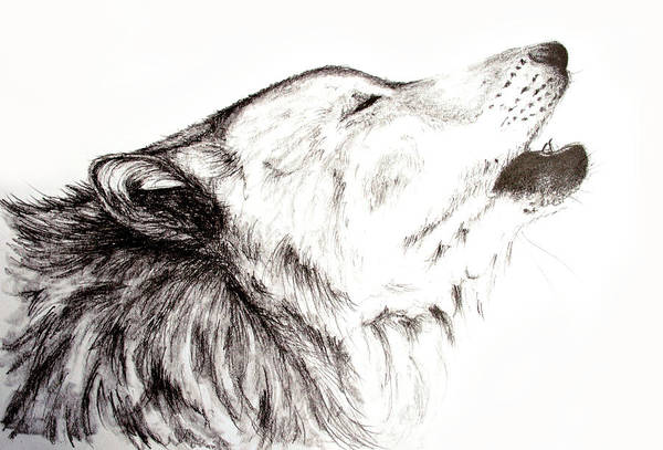 Furry Drawing - Howling by S Simmons