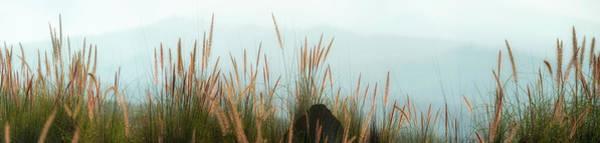 Photograph - Hualalai Fountain Grass by Christopher Johnson