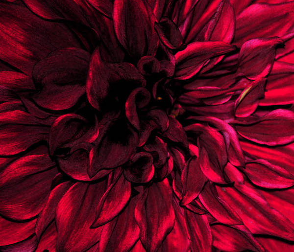 Wall Art - Photograph - Hues Of Complexity In Red by J DeVereS