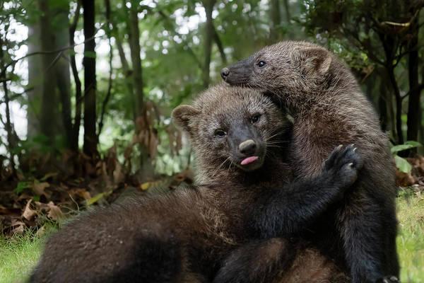Photograph - Hugging My Best Buddy by Dan Friend