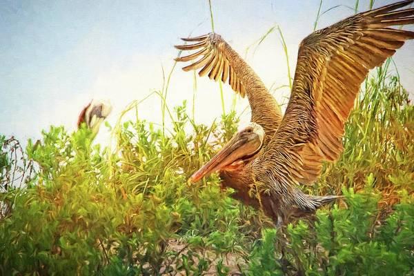 Photograph - Huguenot Beach Pelicans by Alice Gipson