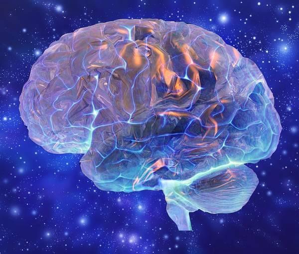Wall Art - Photograph - Human Brain, Computer Artwork by Mehau Kulyk