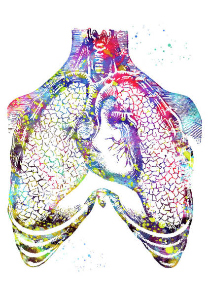 Lung Digital Art - Human Heart And Lungs 2 by Erzebet S