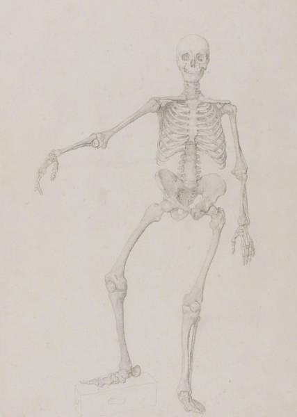 Holiday Drawing - Human Skeleton, Anterior View by George Stubbs