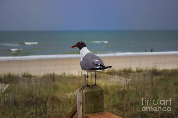 Photograph - Humans Are Weird Seagull by Roberta Byram