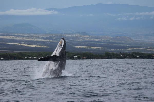 Photograph - Humback Whale by Pamela Walton