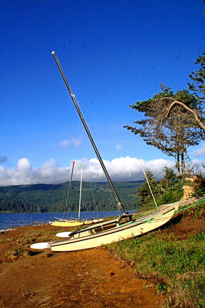 Photograph - Humboldt County Hobie Boats by Joseph Coulombe