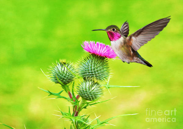 Ruby Wall Art - Photograph - Hummer Hover Dance by Laura D Young