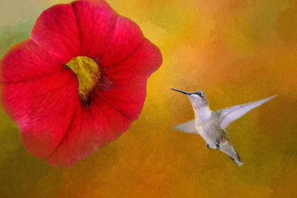 Grime Digital Art - Humming Bird And Flower No. 1 by Billy Grimes