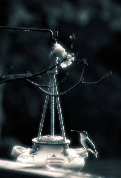 Nectar Mixed Media - Humming Bird At Sunrise Bw Vertical 02 by Thomas Woolworth