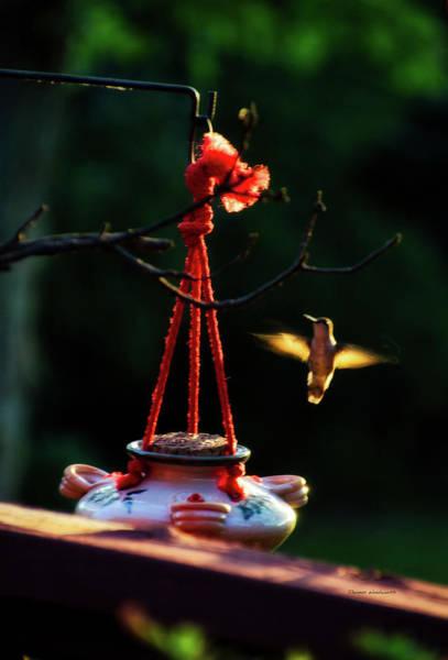 Nectar Mixed Media - Humming Bird At Sunrise by Thomas Woolworth