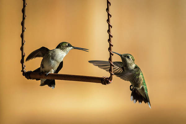 Photograph - Humming Birds by Allin Sorenson