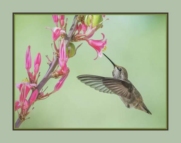 Photograph - Hummingbird 0553-051318-1cr-matte by Tam Ryan