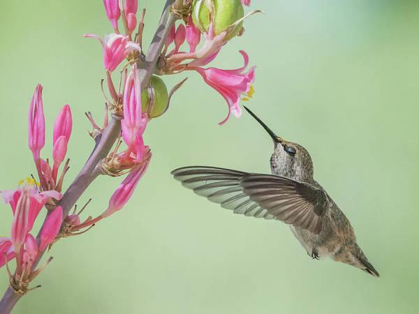 Photograph - Hummingbird 0553-051318-1cr by Tam Ryan