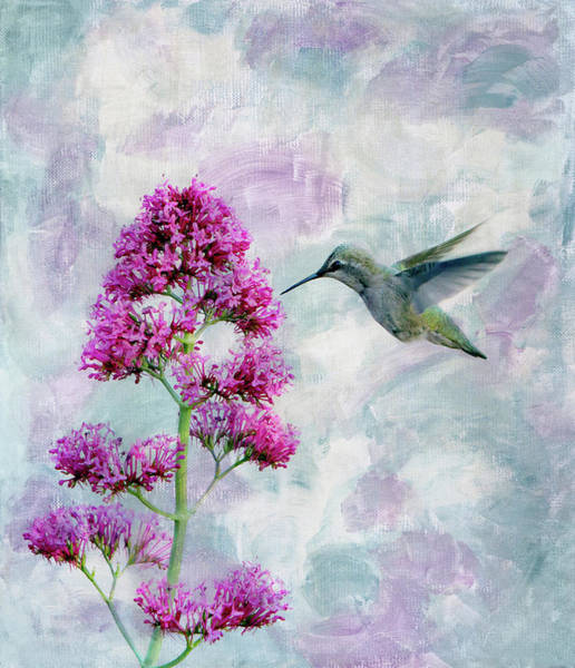 Wall Art - Photograph - Hummingbird 1 by Rebecca Cozart