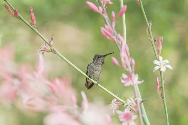Photograph - Hummingbird 7740 by Tam Ryan