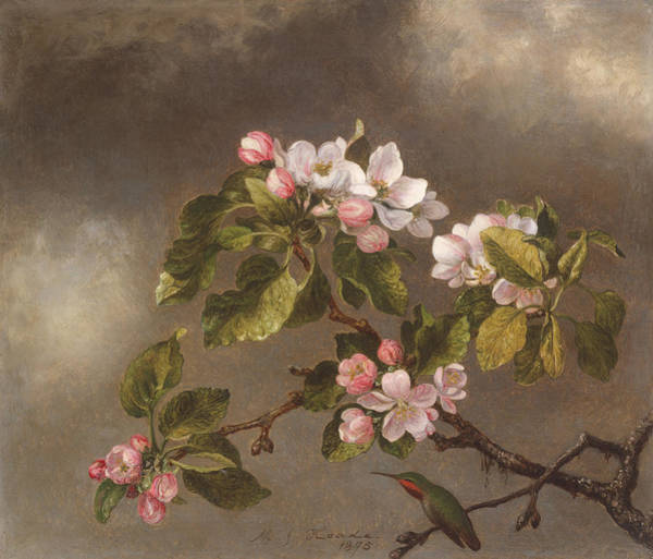 Birds And Flowers Painting - Hummingbird And Apple Blossoms by Martin Johnson Heade