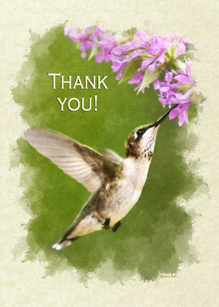 Photograph - Hummingbird And Flowers Thank You Card by Christina Rollo