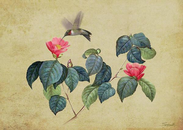 Flowering Trees Digital Art - Hummingbird And Japanese Camillea by M Spadecaller