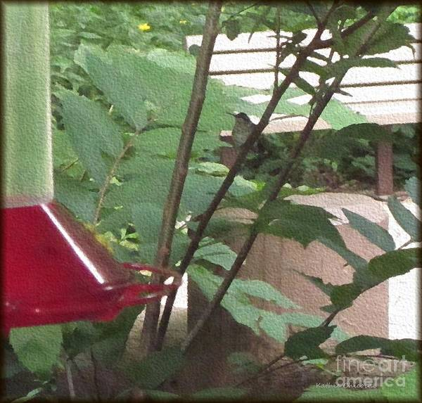 Photograph - Hummingbird At Fullersburg Woods by Kathie Chicoine