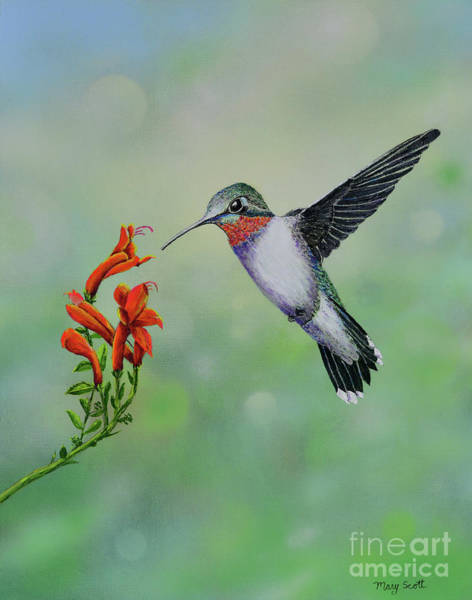 Painting - Hummingbird Beauty by Mary Scott
