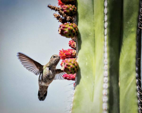 Wall Art - Photograph - Hummingbird Breakfast  by Saija Lehtonen
